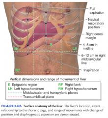 right hypochondrium upper epigastrium left hypochondrium
