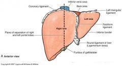 falciform ligament  coronary ligament  lesser omentum  *also note R & L triangular ligaments