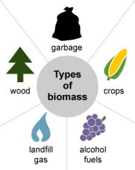the total mass of organisms in a given area or volume.