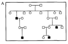 What can you deduces about the mode of inheritance from pedigrees A and B?