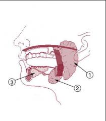Se encuentran en la boca y son: - parotida - Submandibular - sublingual