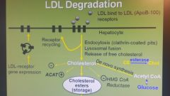 How do cells regulate cholesterol?