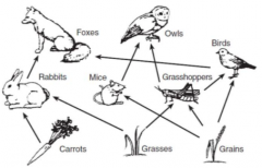 Food Chain - Feeding sequence showing flow of energy Food Web - Many interacting feeding sequences showing flow of energy