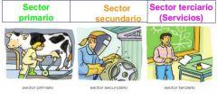¿Cuáles son los sectores económicos?