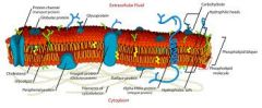 Biological membrane that separates interior of the cell from the outside environment.