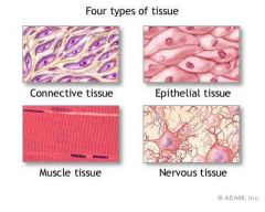 1. Epithelial