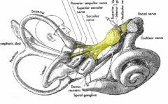 - Superior/anterior semicircular canal - Lateral/horizontal semicircular canals - Utricle - Part of Saccule