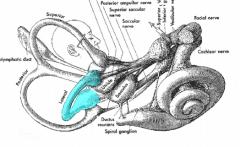 Horizontal/lateral semicircular canals