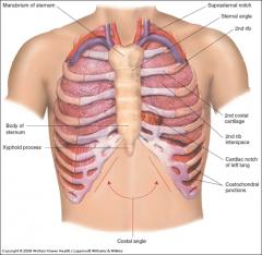- Manubrium - Suprasternal notch - Sternal angle (angle of Louis) - 1st and 2nd ribs - Xyphoid process