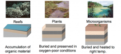 Reefs, Plants, and Microorganisms