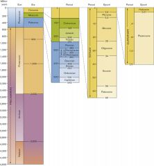 According to this geologic timescale, which epoch immediately preceded the current one?