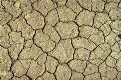 These structures result from the drawing out of wet sediments at the surface of earth. The cracks form due to shrinkage of sediments as it dries.