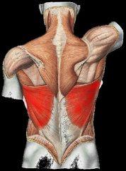 Gross Anatomy Of Muscular System Flashcards - Cram.com