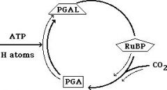 1. ____ requires one molecule each of ATP and the reducing agent from the light reaction. 2. image