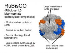 1. The similarity between oxygen and carbon dioxide allows ____ to bind to either oxygen or carbon dioxide. 2. image
