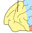 Lobe of the cerebrum where voluntary movement planned, psychomotor skills, motor cortex.