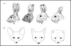 States that the extremities of animals are relatively shorter in the cooler parts of a species' range than in the warmer parts. 