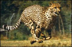 Having limbs adapted for running. 
