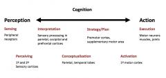 1) sensing   2) Perceiving   3) Interpretation   4) Conceptualization   5) Strategy/Plan   6) Activation   7) Execution
