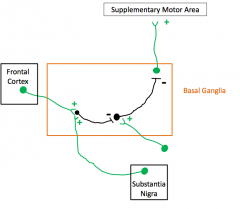 *We don't want excitatory output to the SMA on all the time and to prevent that there is inhibitory interneurons which are activated from another place in order to prevent movement to the SMA (to turn off signals to the SMA)      *Then to ...