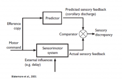 Most movememtns that humans perform are continuous movements so constantly correcting through feedback, how control these feedback is through the theory of efference copy.      When send motor comman and send the signal to the motor comple...