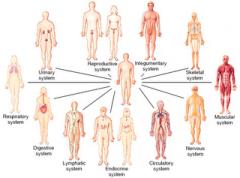 Organ kan i sin tur bilda organsystem, sköter speciella funktioner i kroppen. t.ex. matspjälkningssystemet, hjärt-kärlsystemet, andningssystemet, nervsystemet, hormonsystemet.
