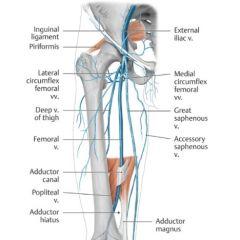(1) Femoral veins (2) Iliac veins (3) Popliteal veins