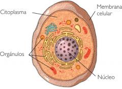 Estructura y Función del núcleo