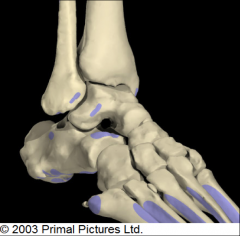 BONES OF THE ANKLE:  ANTERIOR & LATERAL VIEW