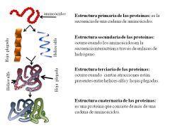 Estructuras de la proteína