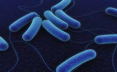 e.g. E coli