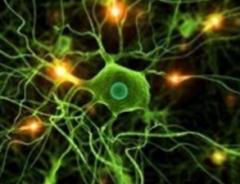 (Funciones de la Membrana) 2- Permite la comunicación con otras células