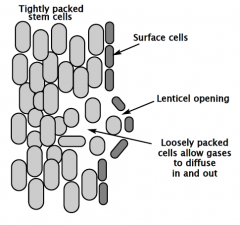 What are LENTICLES?