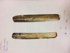 No taxodonta, dimiaria. Concha heteromimiaria, senopaleada. Umbo desplazado a un extremo. Músculo aductor anterior tan largo como el ligamento.