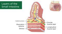 1. Villi 2. Submucosa 3. Muscularis Externa 4. Serosa 5. Myenteric plexus
