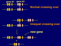- may occur where there is a cluster of two or more related genes (during meiosis)