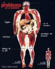 Función de las grasas