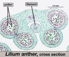 Also identify pollen sac