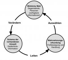 Annahme: beruht auf Wahrnehmungszyklus von Neisser (1979)      Modell: Interaktion mit der Umwelt wird durch vorhandene interne Schemata gesteuert⇒ modifiziert originale Schemata⇒ steuert zukünftige Exploration