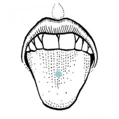 Sensation & Taste: Glossopharyngeal (IX)  Sensation: Lingual nerve (V3)  Taste: Chorda Tympani (VII)