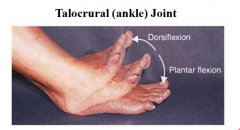 dorsiflexion plantarflexin