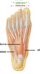 AFA abductor digiti minimi flexor digitorum brevis (flexes toes, off calcaneous to 4 toes) abductor hallucis