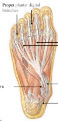 second layer tibial nerve medial plantar-- first lumbrical, flexor hallucis brevis, flexor digitorum brevis, abductor hallucis  lateral plantar-- everything else   common and then proper