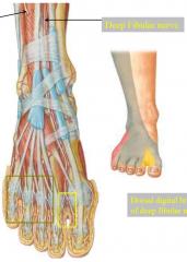 deep fibular nerve-- between 1st and 2nd toe superficial fibular nerve-- everything else