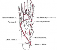 posterior tibial artery to medial plantar  AND lateral plantar-- plantar arch to deep plantar from dorsal