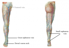 great saphenous vein to femoral small saphenous vein to popliteal vein