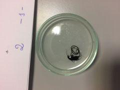 Cuerpo de un diámetro inferior al milímetro y de longitud unas 150 veces superior.