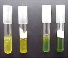What microbial activity is responsible for the color change observed on the surface of the unsealed tube in tube set on right?
