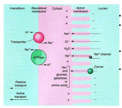 SI absorbs 95% of Na via Na+/glucose co transporter. The intracellular pH is maintained by the H+/Na+ exchanger.