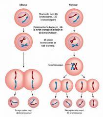 Meiose er kønnet formering. . Kvindens ægceller bliver dannet når kun selv er et foster og mandens sæd bliver dannet løbende. Mitose sker når fosterets celler begynder at dele sig til flere og flere celler.